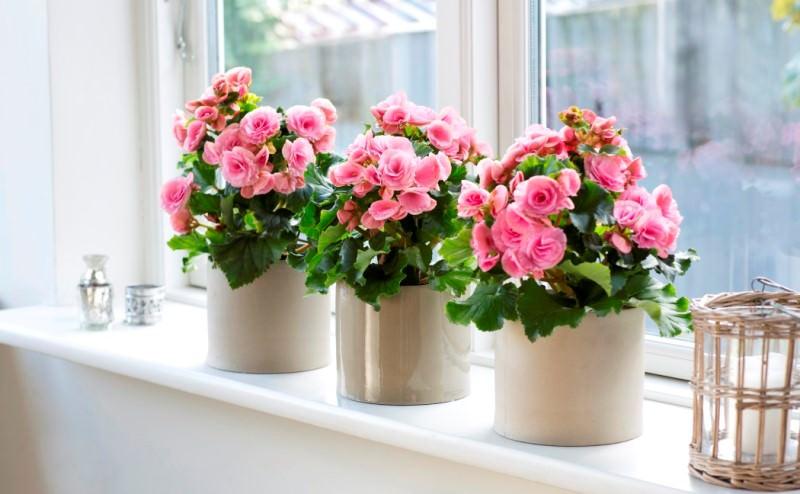 Цветок очень хорошо отзывается на правильный уход