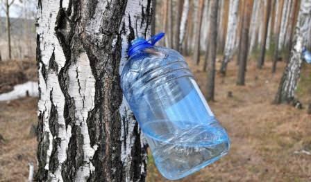 На улице первый месяц весны, и многие задались вопросом, как приготовить березовый сок, чтобы сохранить его полезные свойства