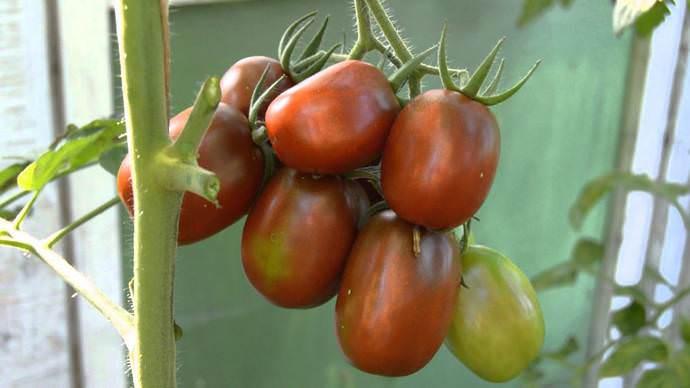 Главным сортовым достоинством томата Де Барао принято считать высокую и стабильную продуктивность