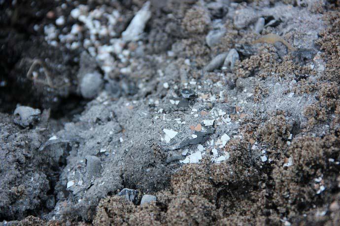 Рекомендуется пропудривание тепличного грунта порошкообразной смесью из равных частей золы и измельченного древесного угля
