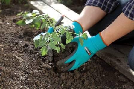 Перчатки Garden Genie Gloves - это редкий тип, который предназначен для работ в саду и огороде