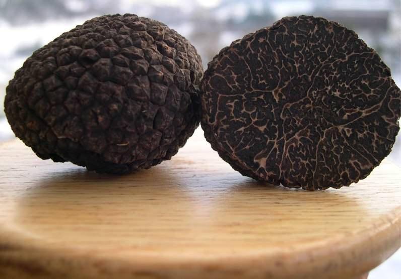 Черные зимние, или перигорские трюфели являются самыми ценными из всех видов и произрастают в основном на территории Франции