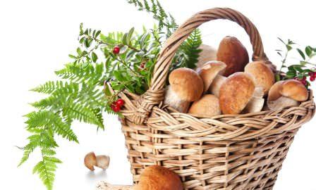 Сберечь пользу свежих белых грибов можно, заготовив их на зиму