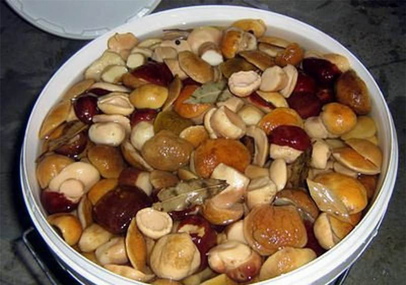 Правильная обработка грибов — залог сохранения полезных свойств и витаминов в них