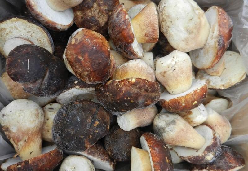 Сберечь собранные грибочки на сутки можно, очистив их от земли и сложив в холодильник