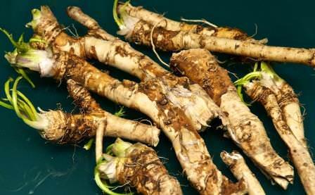 Благодаря простым правилам можно надолго сберечь целебные свойства и остроту кореньев