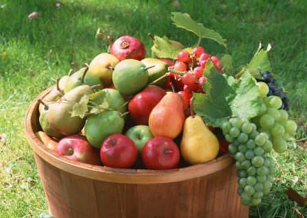 Яблоня и груша относятся к семейству розоцветных