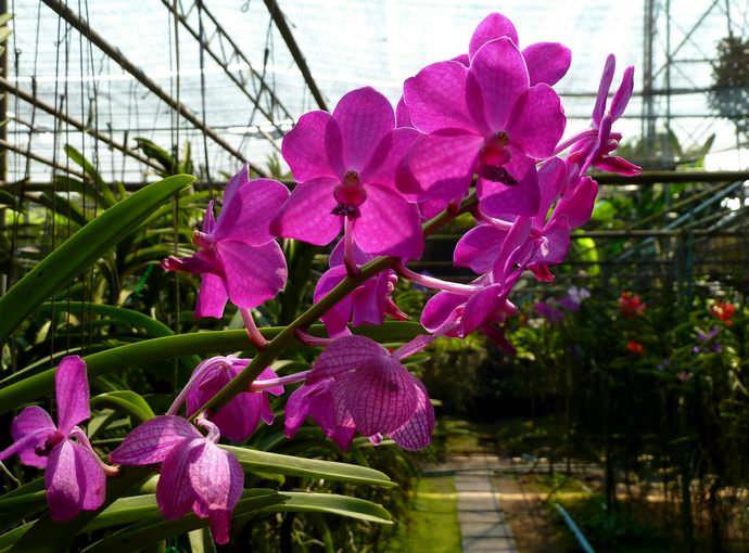 Если вы решили выращивать цветы не в домашних условиях, а в теплице, сроки посадки растений будут другими