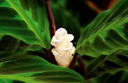 Рано или поздно каждый любитель комнатных растений решается завести тропическую красавицу