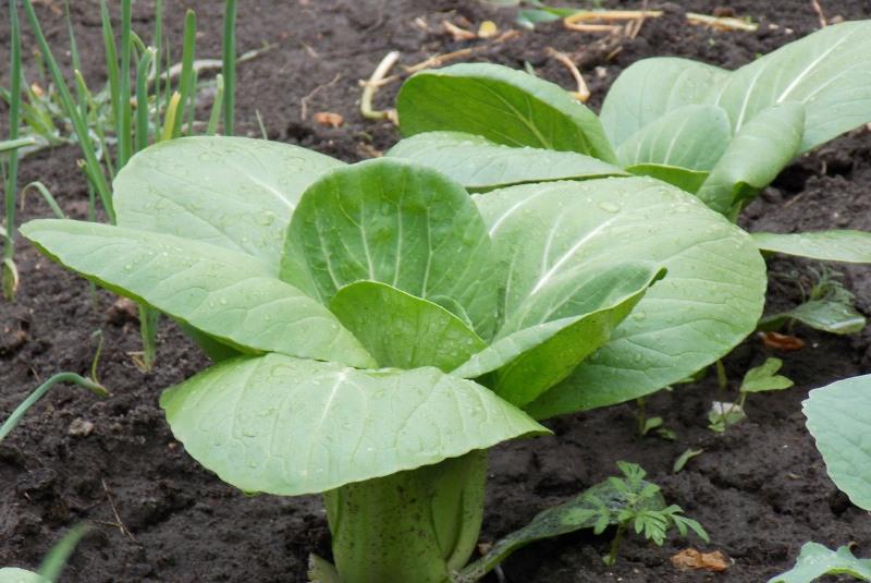Любая овощная культура требует особенного ухода и требований в выращивании