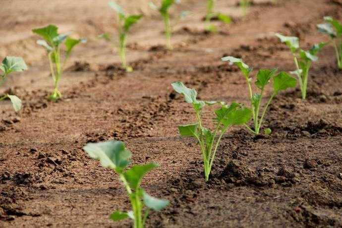 Иногда важно уделить внимание всем факторам, влияющим на рост растения