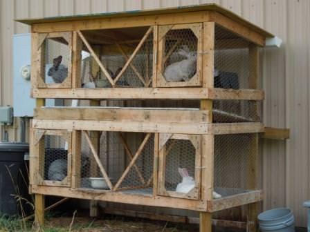 Приверженцы натурального хозяйства часто останавливают свой выбор на содержании кроликов