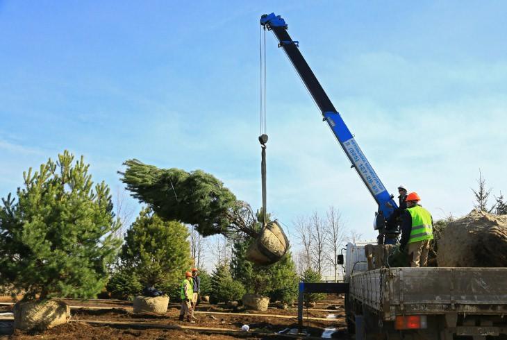 Для перевозки таких больших деревьев могут понадобиться автокраны
