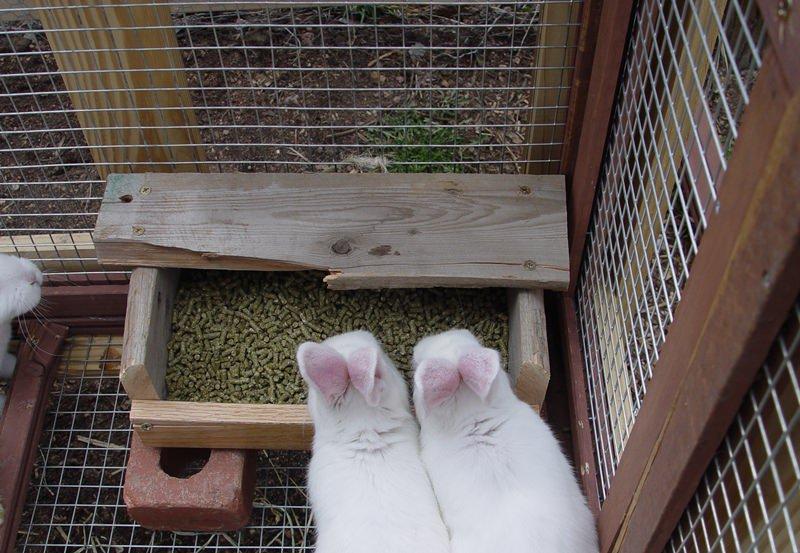 В зависимости от сезона рацион кроликов варьируется