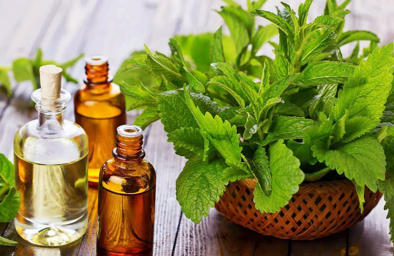 Своим ароматом мята обязана значительному содержанию эфирного масла на ментоловой основе