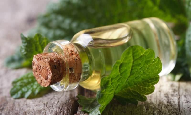 Мятным маслом лечат раны, порезы, обморожения, ушибы и растяжения