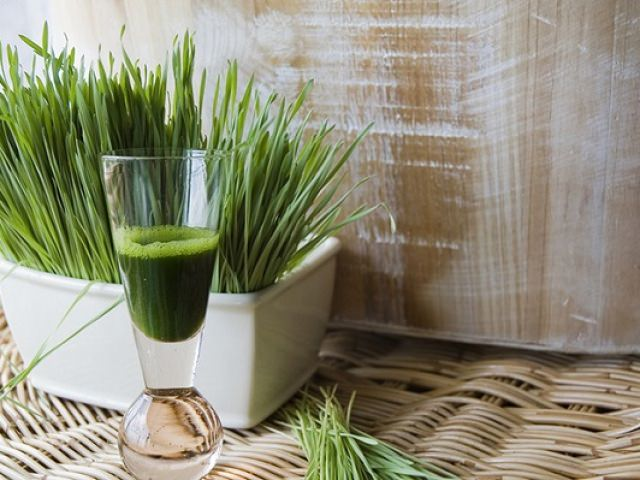 В народной медицине из лекарственного растения и его корней заготавливают сок