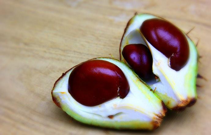 Плоды каштана конского славятся своим кровоостанавливающим, а также рассасывающим действиями
