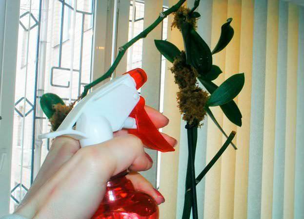 Орхидею можно опрыскать из пульверизатора готовым раствором, а повторить процедуру рекомендуется через 10 дней