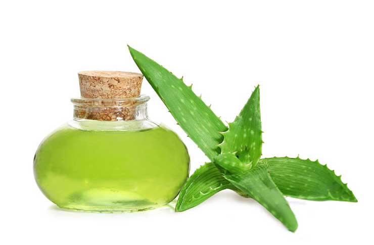 Сок алоэ богат эфирными маслами, витаминами, минералами, ферментами и другими жизненно важными компонентами