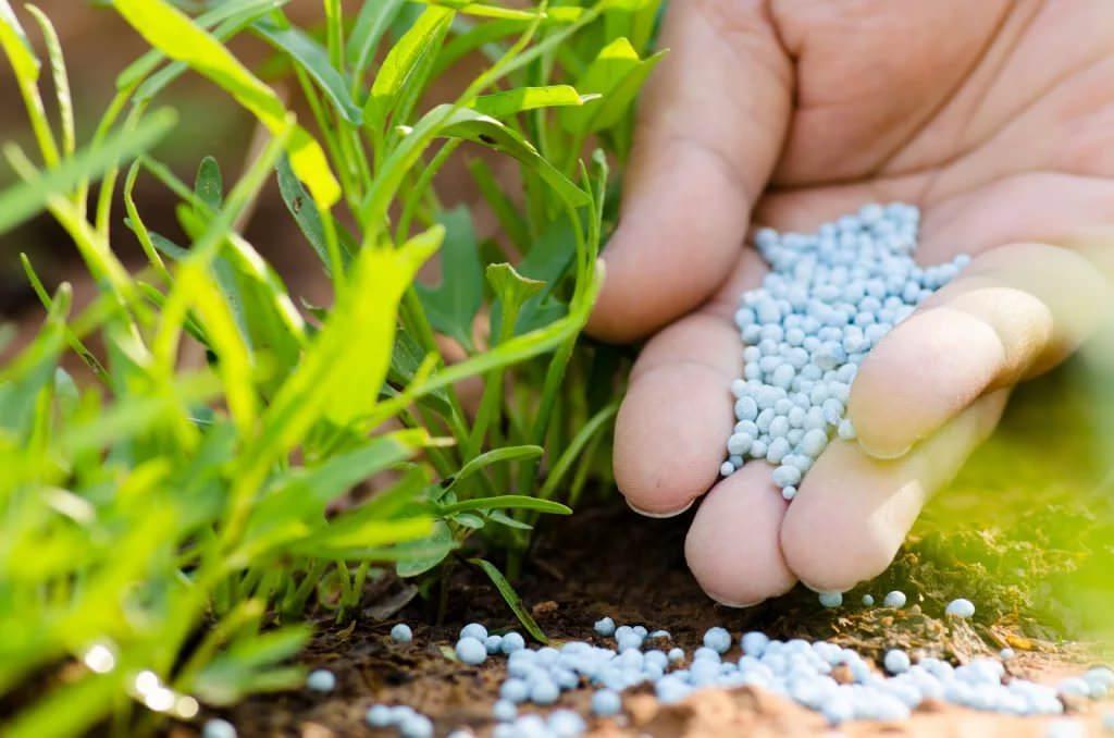 Азот – это основа питания всех растительных организмов