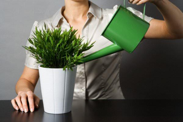 Аммиачную селитру можно использовать в комнатном цветоводстве