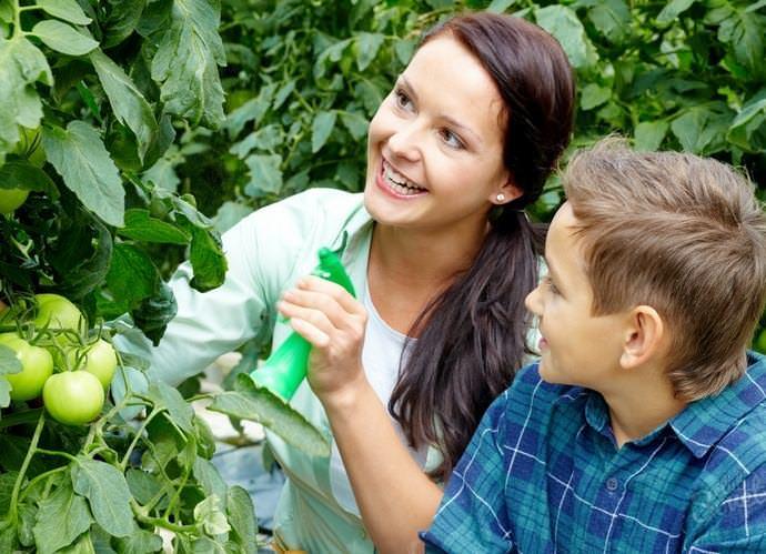 Опрыскивание овощных культур проводится из расчёта 10 литров разведённого инсектицида на 100 квадратных метров