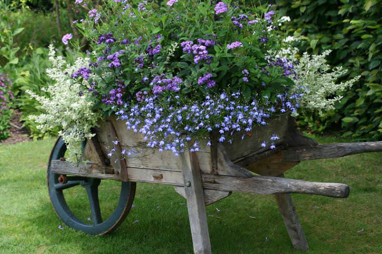 На садовом участке гелиотроп занимает достойное место в оформлении ландшафтного дизайна, благодаря своему яркому и продолжительному цветению