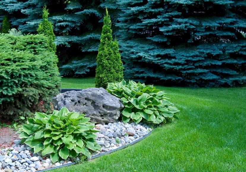 Хосты спокойно переносят присутствие рядом практически любых растений