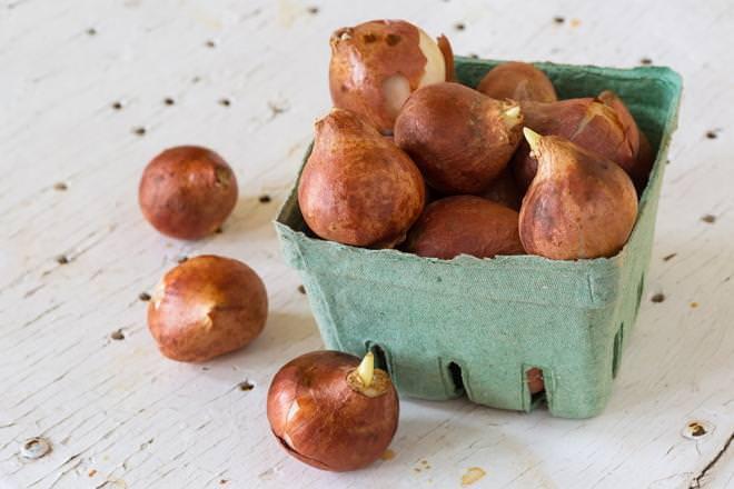 Для успешного хранения луковиц зимой, нужно изначально подобрать для них правильную тару