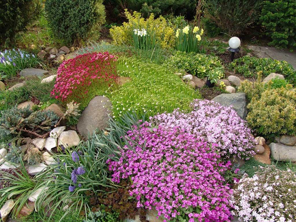 Иберисы отлично переносят соседство с другими цветами