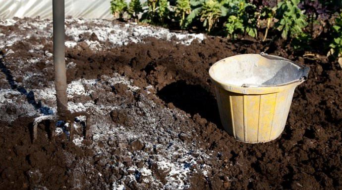 На глинистом и суглинистом участке целесообразно использовать известь