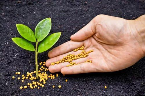 Калий играет довольно важную роль в жизни растения