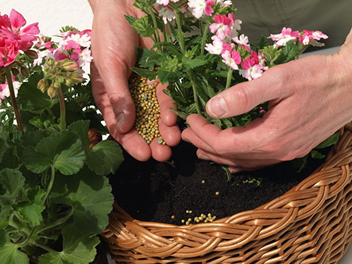 Чтобы поддерживать здоровье комнатных растений на должном уровне обязательно нужно вносить калийные удобрения