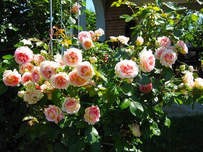 Выбирая опоры для садовых растений следует обращать внимание на отзывы о них