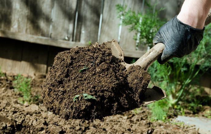 Перед посадкой малины участок перекапывают, затем рыхлят, одновременно удаляя всю сорную траву