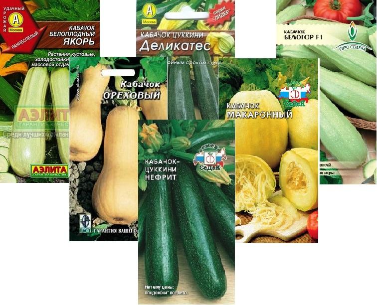 Опытные овощеводы советуют приобретать семена кабачков в специализированных магазинах