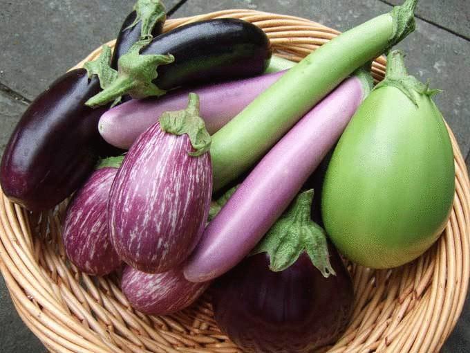 Выбор сорта зависит от региона выращивания