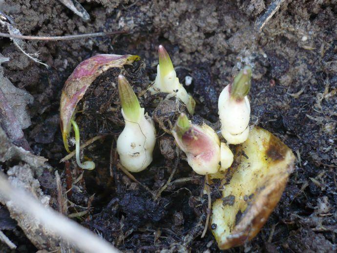 Посадка цветов осенью преследует цели своевременной адаптации растений, развития и укрепления их корневой системы до наступления холодов