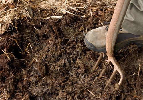 Когда навоз при помощи вил распределен по поверхности грунта, удобрение нужно как можно скорее заделать в землю