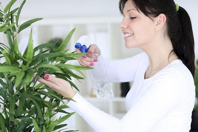 Зеленое мыло применяется для защиты декоративных растений