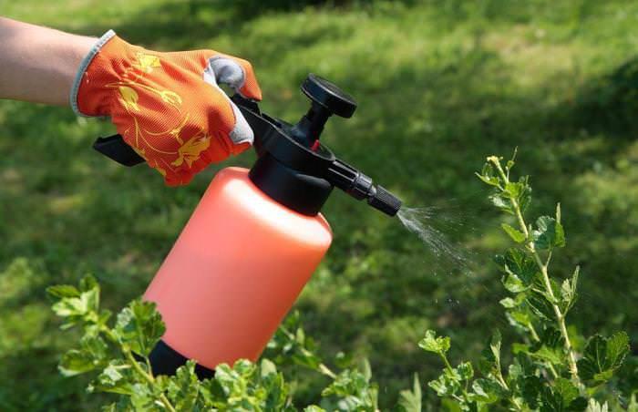 Зеленое мыло может применяться за 5 дней до уборки плодов