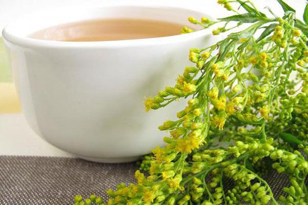 Водные и водно-алкогольные экстракты травы золотарника уплотняют и укрепляют кровеносные сосуды