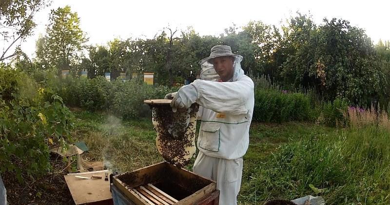 Пчеловодство для тех, кто только начинает, - своеобразная азбука, изучение которой должно осуществляться с запоминания азов, а не с попытки читать с середины или конца букваря