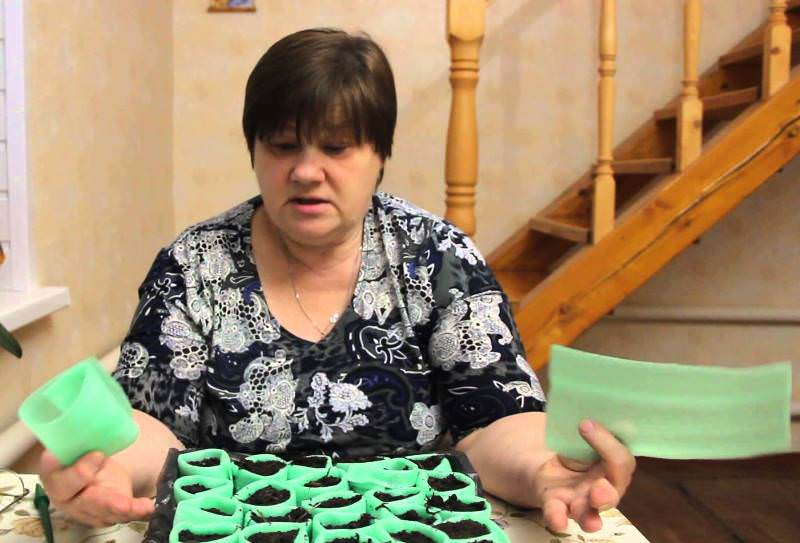 """Пикировка в целлофановые пакеты или так называемые """"пеленки"""" — саженец с прищипанным корнем помещается на прямоугольный кусок пленки и засыпается небольшим количеством почвы"""