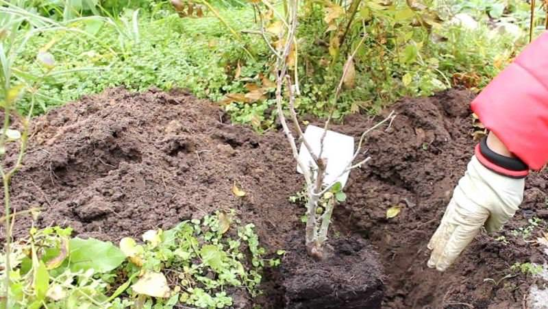 Растения можно сажать прямо в сетке или в картонной таре