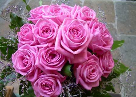 Роза Аква — это особенный сорт, выведенный стараниями многих селекционеров