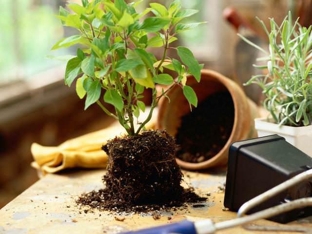 В период с новой до полной луны Период с новой до полной луны надземных растений
