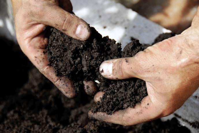 Профилактику следует начинать с предварительной подготовки и дезинфекции почвы