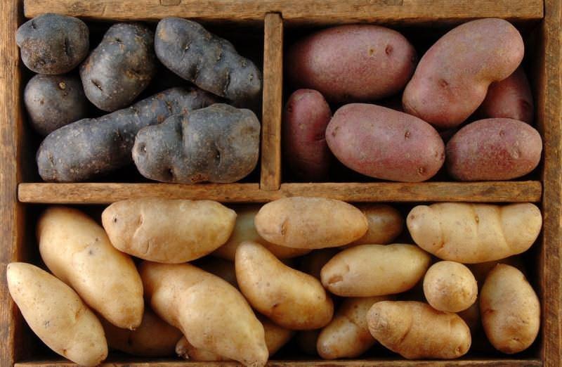В домашних условиях картофель нуждается в тщательной сортировке независимо от будущего места хранения